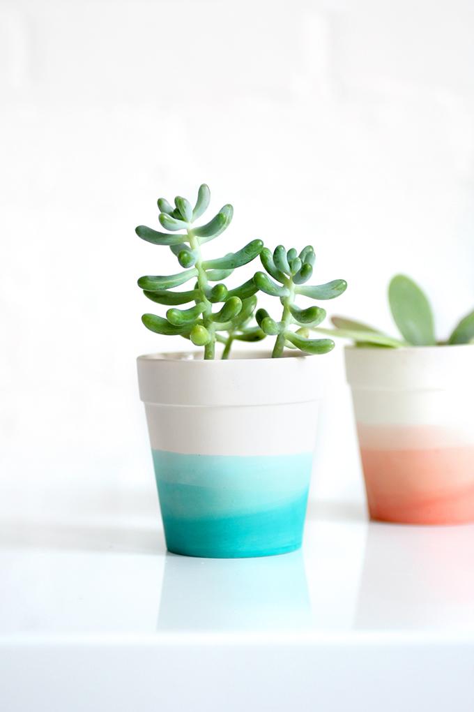 diy spendides petits pots de succulentes le meilleur du diy. Black Bedroom Furniture Sets. Home Design Ideas